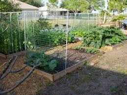 layout of garden trellis for peas and beans beans on the