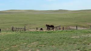 east montana grass ranch scott western realty