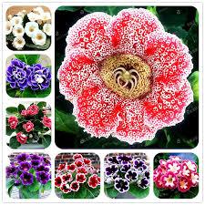 Cheap Flower Seeds - online get cheap flowers seeds gloxinia aliexpress com alibaba