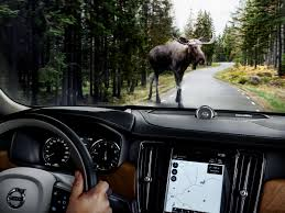 volvo u0027s large animal detection system spots moose deer and hits