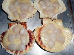 cuisiner des coquilles jacques fraiches recette de coquilles jacques gratinées au gouda