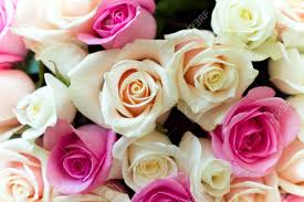 colorful roses beautiful colorful roses bouquet stock photo picture and royalty