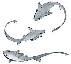 25 trending shark illustration ideas on pinterest drawings of