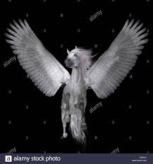 pegasus is a legendary divine winged stallion and is the best