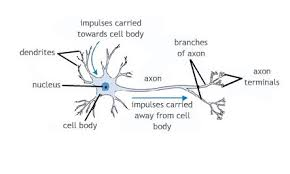 What Is Dead Tissue Called Module Ii Cells And Tissues Injury And Repair