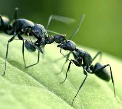 Ants In The Bathroom by 32 How To Get Rid Of Ants In The Bathroom Nevada Decoration