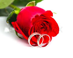 red rose rings images Red rose with silver rings on white background wedding postcard jpg