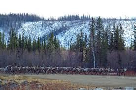Alaska Wildfire Road Closures by Taylor Highway Interior Alaska Driving Guide