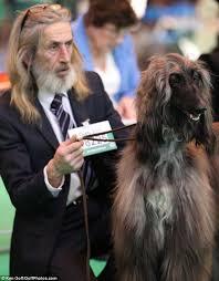 afghan hound racing uk 160 best afghan hounds images on pinterest afghans animals