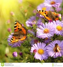 butterfly flowers butterfly on flowers stock image image of horizontal 34721835
