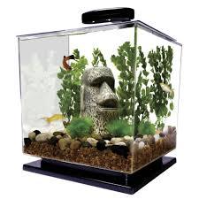 Aquarium For Home Decoration Mini Aquariums Pros And Cons Of Small Fish Tanks