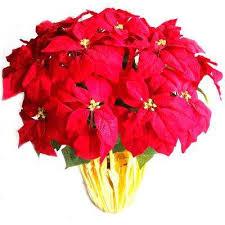 christmas plants christmas plants flowers indoor christmas decorations the