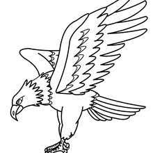 parrot picture coloring pages hellokids