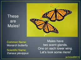 science is like a child looking at a butterfly