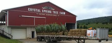 crystal spring tree farm christmas trees lehighton pa