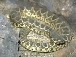 Snake Holes In Backyard Snakes Spiders Scorpions U0026 Ticks Insects In Valencia U0026 Santa