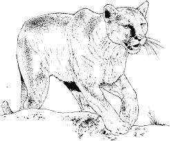 mountain lion coloring pages coloring page for kids