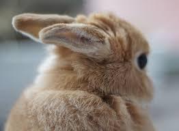 Behind The Ear Anatomy Rabbit Anatomy Body Systems U0026 Functions