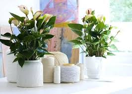 Wooden Vases Uk Hanging Wooden Plank Plant Holders House Plant Container Ideas