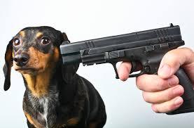 boxer dog kills man facebook is mobilizing an army against dog killing cops vocativ