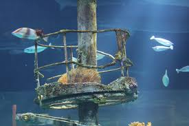 memberships tickets now on sale for wonders of wildlife museum