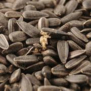 sunflower seeds wild bird food from webbs direct online
