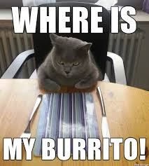 Burrito Meme - hungry cat wants his burrito meme on imgur