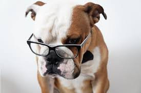 Are Dogs And Cats Color Blind Can Dogs See In Color And More Cool Facts About Dog Eyesight