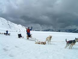 shore excursion dog sledding on mendenhall glacier via helicopter