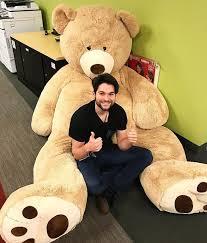 big teddy search in pics a pig visits big teddy a broken