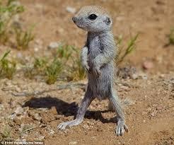 Arizona wild animals images 989 best arizona images arizona travel grand jpg