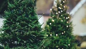 Christmas Tree Shopping Tips - where to get a real christmas tree to spruce up your home plus