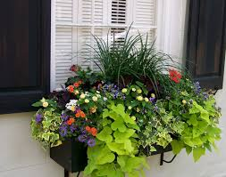add instant charm to your house with sweet window boxes ideas