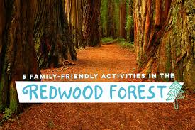 California Nature Activities images 5 family friendly activities in the redwood forest alamo png