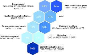acute myeloid leukaemia a paradigm for the clonal evolution of