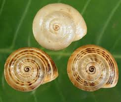 Types Of Garden Slugs Identification And Control Of Pest Slugs And Snails For Broadacre