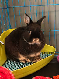 show me a bunny house rabbit society