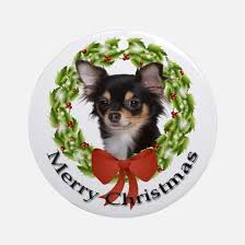 haired chihuahua gifts merchandise haired chihuahua