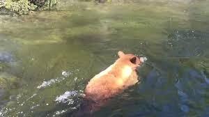bear into a waterfall backpacker