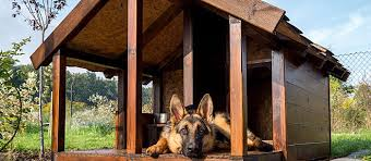 home design story dog bone 20 of the best free diy dog house plans on the internet care com
