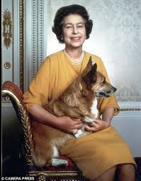 queen elizabeth u0027s shock as corgi dogs are fed reheated meals