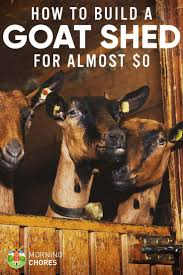 Goat Home Decor Best 25 Goat Shed Ideas On Pinterest Goat Shelter Goat Barn