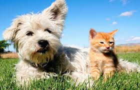 Lake Oswego 220 A Avenue Full Circle Veterinary Care Veterinarian In Lake Oswego Or Usa