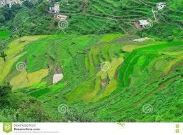 Himalayan Mountains Map Step Farming In Himalayan Mountains In Uttarakhand India Stock