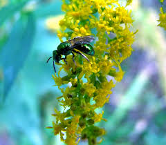 Clay And Limestone Pollinators Come In All Shapes Sizes And