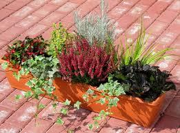 bepflanzter balkonkasten 80 cm wintergrün balkonien pinterest