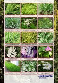 Vertical Garden Adalah - vertical garden indonesia taman vertikal indonesia 0811 900 858