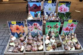 flower market selene abroad