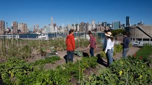 San Francisco Urban Garden - pilot episode urban farming food forward pbs