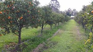 leeming fruit tree nursery home